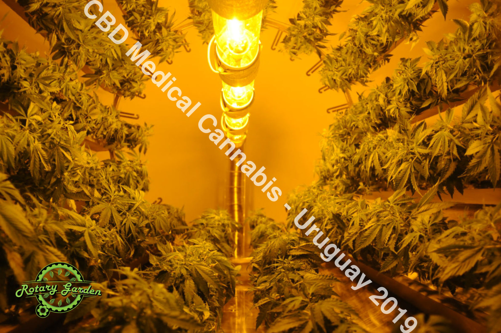 Rotary Garden, CBD Cannabis Medicinal, research project, Uruguay 2019